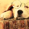 the_wynster: (Bibliophile)