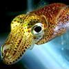 corrigenda: squid (y helo thar)