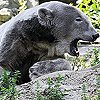 bearcave: (pic#1731506)