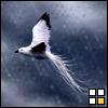ravenari: (art - soaring)