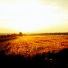 nightbird: field, sunset (all the big empties)