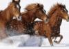 ext_37262: (horses)