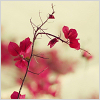 sunlit: Pink flowers. (Pink flowers.)