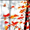 ithildin: (Nature - Fall Orange on Grey)
