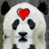 pandamonium: (Panda!Love)