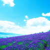astrael: (summer sky lilac)