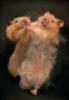 tamlin_kitsune: (hamsterdance)