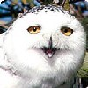 annmcn: (Silly owl)