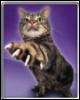 catscratch: (Cat Scratch)