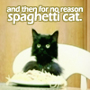 "simonejester: cat in high chair with spaghetti, text: ""and then for no reason, spaghetti cat"" ([text] spaghetti cat)"