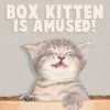 simonejester: kitten in box, text: box kitten is amused! ([text] box kitten is amused!)