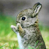 pennyroyal: Clapping bunny (Clappity clap)