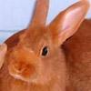 vandertulp: (-rabbit rabbit-)