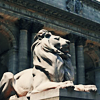 withherhands: (NYC - Library Lions)
