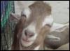 goatsattic: (pic#1774740)