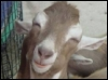 goatsattic: (Default)