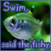thedivinegoat: Photo: X-Ray Tetra - Text: Swim Said the Fishy (My Photo - Swim Said The Fishy)