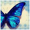fiorelina: butterfly (Butterfly)