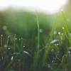arclight: (Grass)