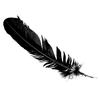 arclight: (Black feather)