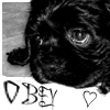 "lasergirl: puppy with the word ""obey"" under it, and a heart (obey the cocker spaniel)"