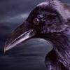 booraven: (Raven)