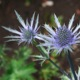 botanical: flower (pic#178620)