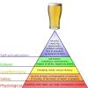 tyggerjai: (maslow, beer)