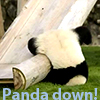 murdercake: Little panda falls down, hits head. (Default)