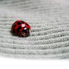 linnaly: (ladybug)