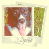 lizblackdog: (Spike: Framed Portrait)