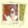 lizblackdog: (Spike: Framed Portrait)