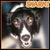 lizblackdog: (Spike: Shark Attack!)