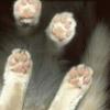 hobbot: (catbot)