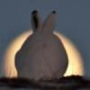 hel_sim: (заяц и луна)