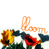 lily_winterwood: (stock-flowers) (Default)