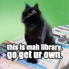 lily_winterwood: (stock-librarycat)