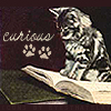 ext_47: a cat on top of a book (kitty curious)