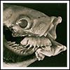 crumpetsfortaenia: (Cymothoa)