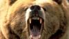 bkdelong: (angrybear)