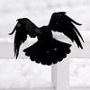 ashtoreth: (spread your wings)