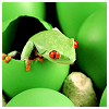 photogfrog: (frog jar) (Default)