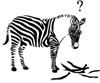 zeborah: Zebra with stripes falling off (stress and confusion)