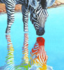 zeborah: Zebra looking at its rainbow reflection (rainbow)