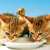 laurainlimbo: (cats drinking)