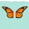 st_aurafina: monarch butterfly wings (Butterfly wings)