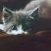 jess_mohr: (grey kitty)