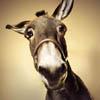 mific: (Baffled donkey)