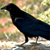 helborn: (I'M A BIRD)