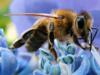 helen99: Honeybee (Honeybee)
